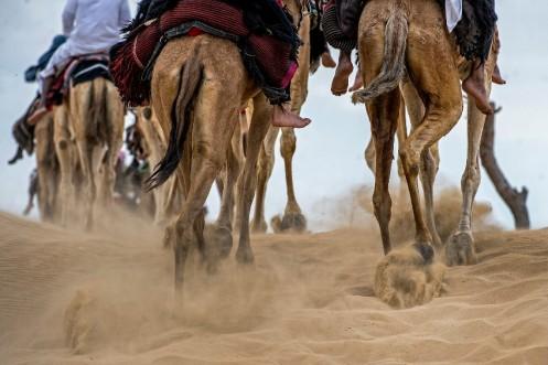 camel-trek-11