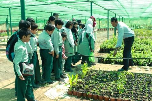 PAD-plantation-1